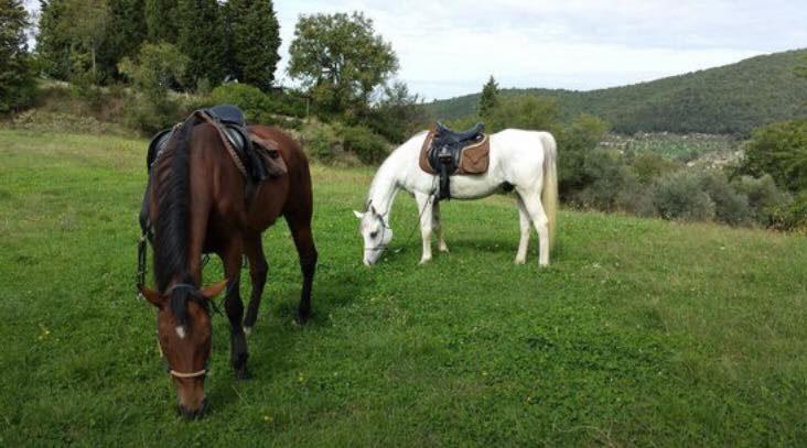 Nei dintorni nuovo ranch - Nuovo ranch bagno a ripoli ...